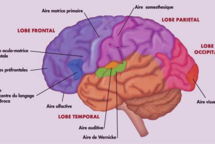 Le pole Alzheimer